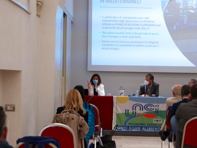 Italian association UNCI launches the Three-Year Fisheries Plan and aims at synergy with Malta